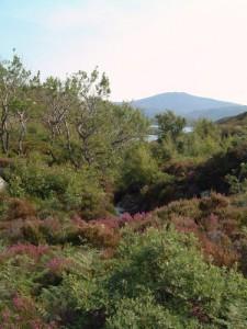 Allt Volagir, Loch Eynort
