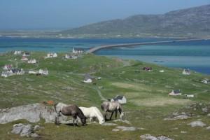 Eriskay Ponies and Causeway